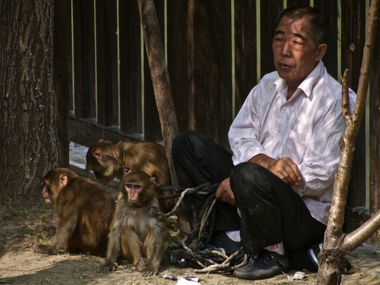 A man and his monkeys, Shanghai, China by Samuel Victor
