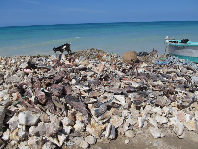 Drying Fish in Anse-a-Pitre, Haiti by Gawain Lynch