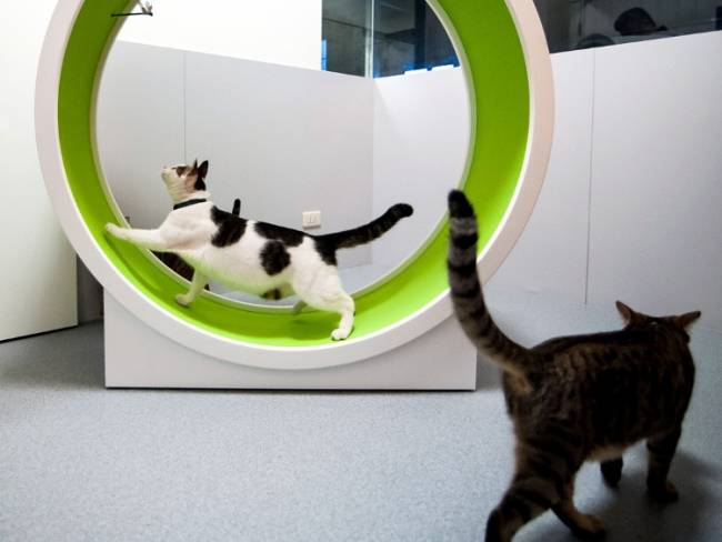 Exercise your cat in minimalist style with the CatsWheel II by CatWall.